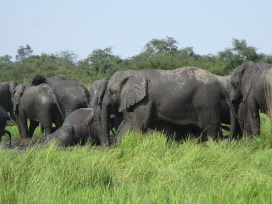 2014_10_elephants_8-1415824696