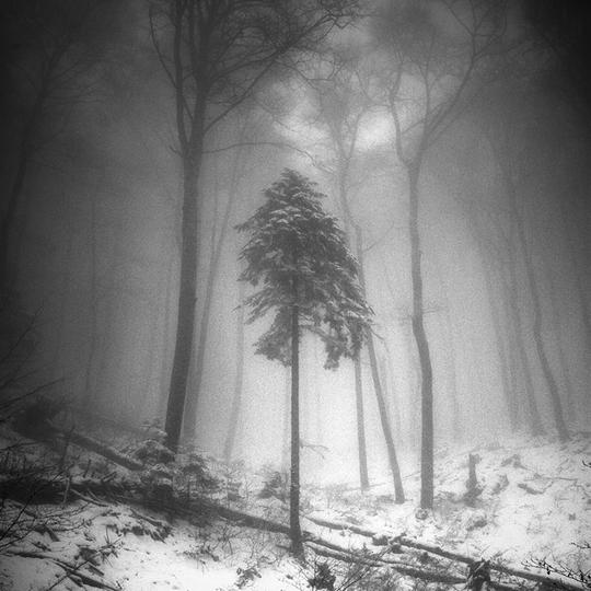 Blais10-forest650-1418629397