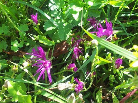 Plantes-1418727351