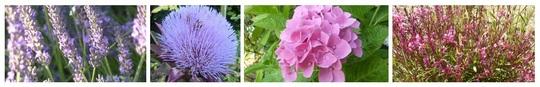 Bandeau_fleurs_roses_1-1419349703