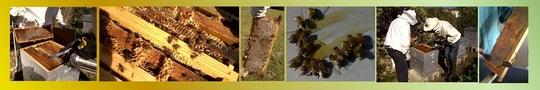 Bandeau_abeilles_1-1419357454