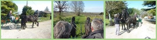 Bandeau_chevaux_retouch-1419363204