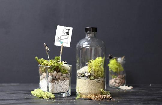 Moss-terrarium_main2-1420217608