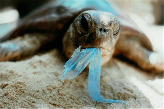123ocean-plastic-turtle-1420340954