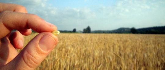Grain-ble-hono-2-1422388708