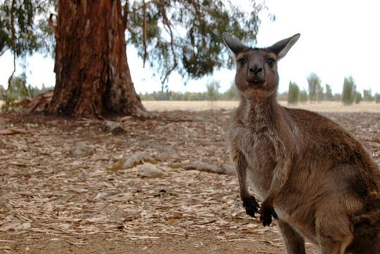 22_kangaroo_island__1_-1422558484