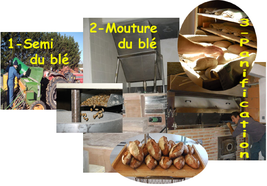 Montage-grain-au-pain2-1423049811