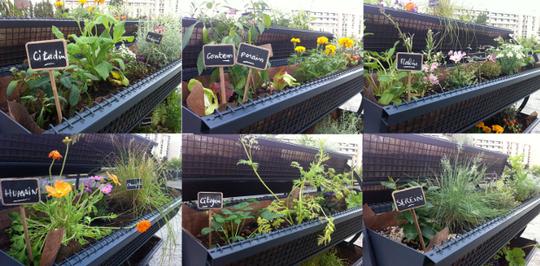 Jardinieres-1423330981