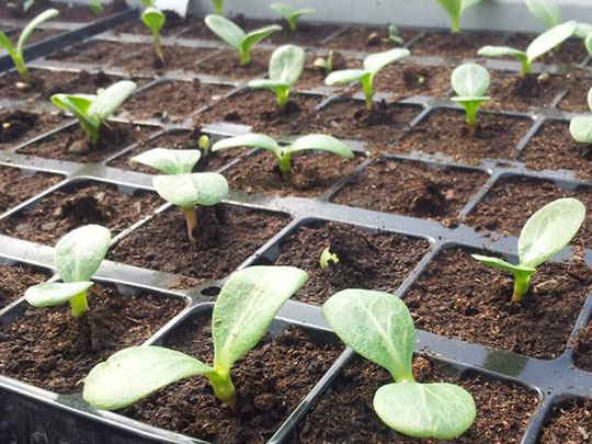 Plants-1423415308