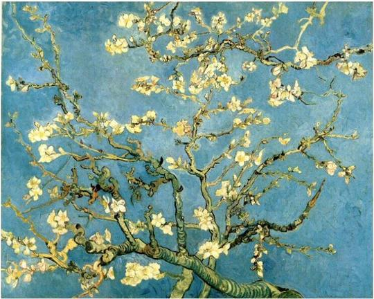 Blossoming-almond-tree-1423675519