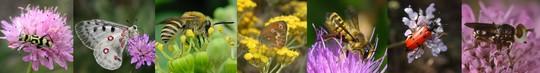 Bandeau_pollinisateurs-1424247928
