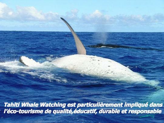 Baleine_kisskiss-1426604742
