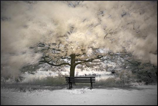 Un_arbre-1426688705