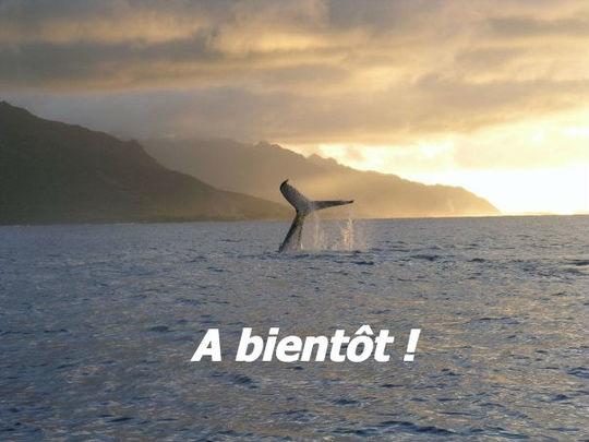 A_bient_t_queue_baleine_sunset_kisskiss-1426915657