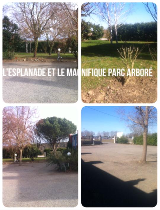 Esplanade_et_parc_arbor_-1427489574