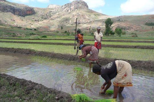 Madagascar_image-1427897902
