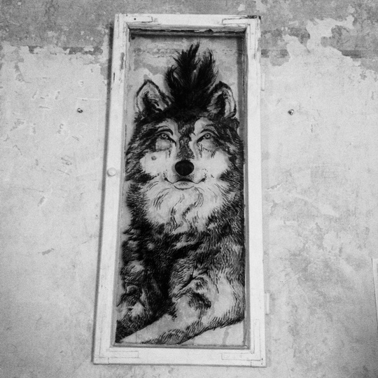 Fensterwolf-1428072604