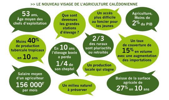 Nouveu_visage_de_l_agriculture_cal_donienne-1428979870