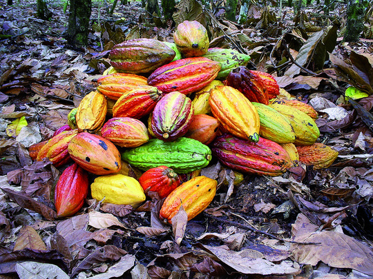 Cacao-1429550978