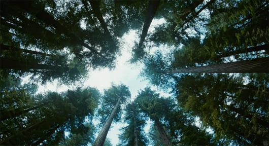 Treeoflifetrees-1429871543