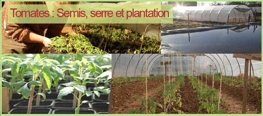 Tomates_copie-1430066422