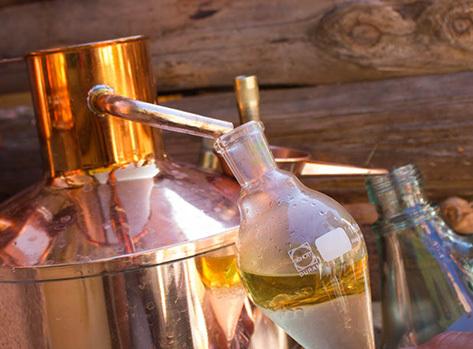 Distillation_lavande-1431329731