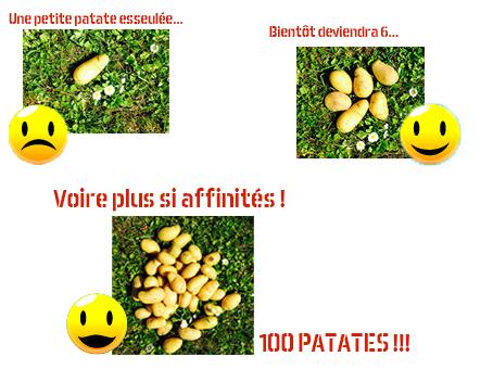 Patates-1432289607