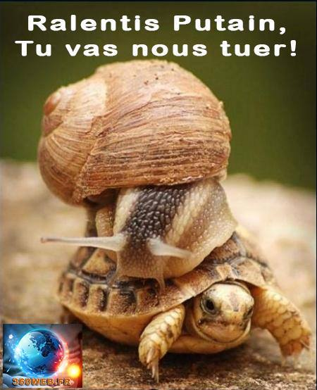 Journ_e_de_la_lenteur__escargot__tortue-1432561250
