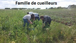 Cueilette1-1433096982