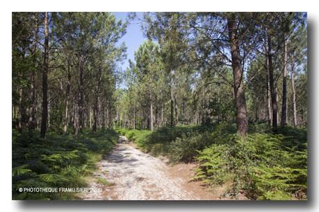 France_landes_soustons_framissima_nature_soustons_2-1433179317