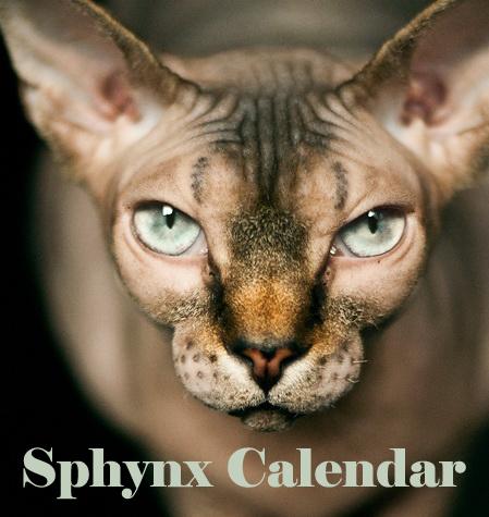 Sphynx_calendar_avatar_copy-1433179491