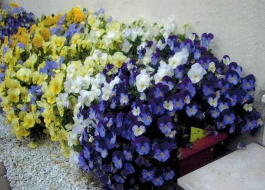 Fleurs_2012-1433575671