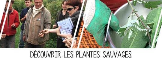 Bandeau_12_plantes-sauvages-1434378142