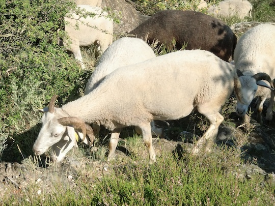 Moutons-1434565052