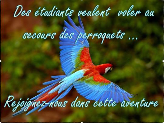 Perroquet_rejoingnez_nous-1435833385