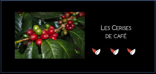 Cerises_de_caf_-1436280183