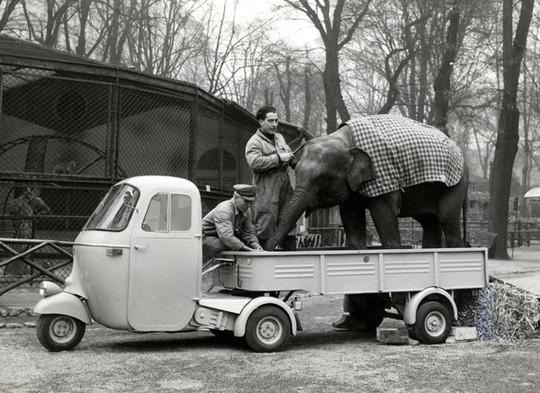 Ape-elephant-1436621094