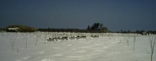 Ruches_sous_la_neige-1437152245
