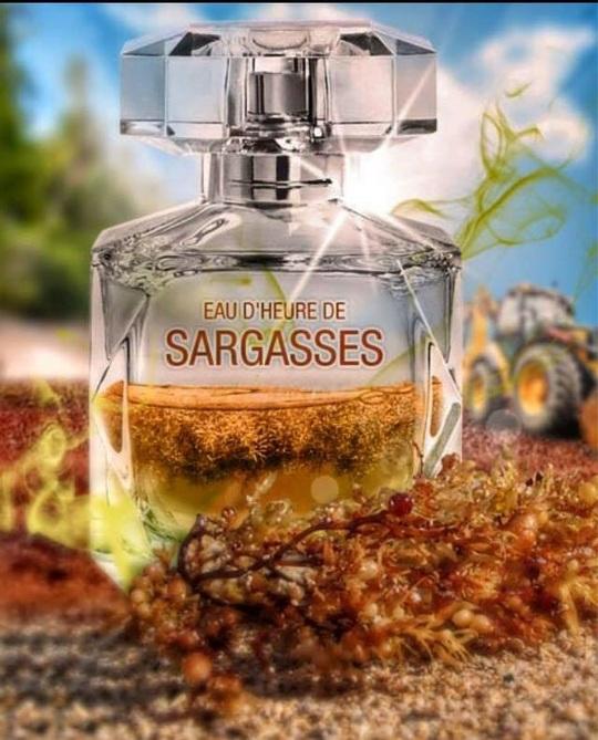 Eau_d_heure_de_sargasses_original-1439876258