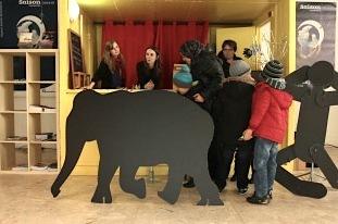 Elephant-1441112432
