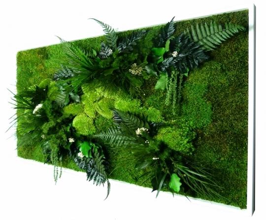 Zoom_tableau_vegetal_stabilise_forme_rectangulaire_xl_58x98_cm_cadre_decoratif_blanc_11593-1441546926