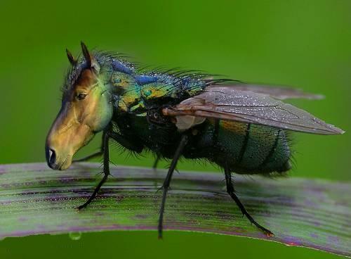 Horsefly-1444335461