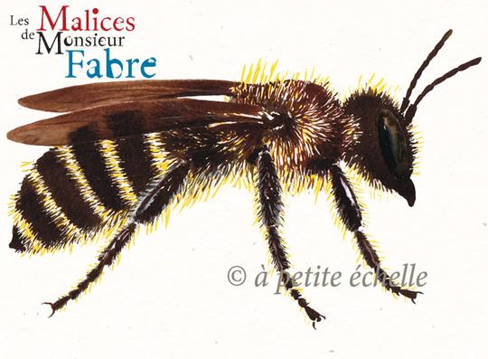 Les-malices-de-monsieur-fabre-insecte-osmie-1444938790
