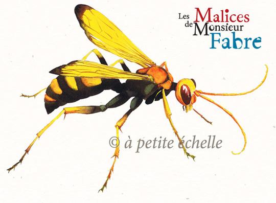 Les-malices-de-monsieur-fabre-insecte-pompile-1444938864
