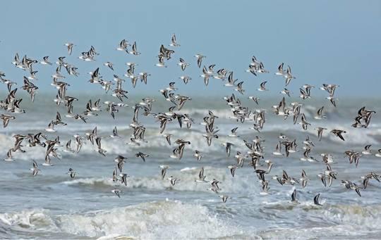 Plage_oiseaux__cole-1446118228-1446628941