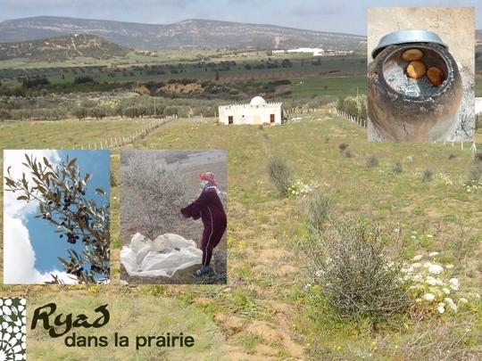 7-ryad-nature-oliviers-1447334968