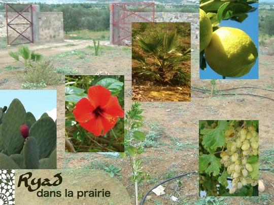 8-ryad-nature-segnia-1447334994