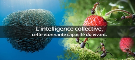 Intelligence-collective-1447410002