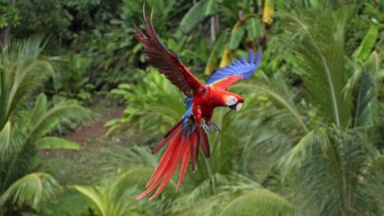 734211__background-winter-animals-flight-scarlet-wallpaper-macaw-wallpapers_p-1451228123