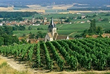 Villedommange_champagne_c_michel_jolyot-1451565541